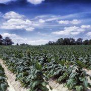 【※最新情報】ほぼ全ての農作物にドローン農薬散布が可能に
