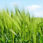 ドローンによる空中散布可能な農薬と作物の調べ方