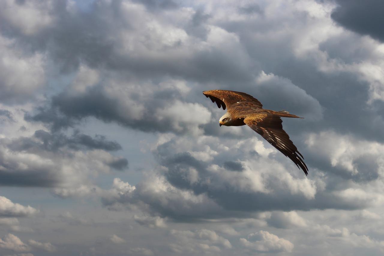 ドローンは鳥に襲われる?トンビなどの攻撃の可能性について