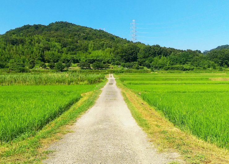 規制緩和でドローンによる農薬散布が変わる! ドローンによる農薬散布の実践的な技術が身に付く「DJI農業ドローンオペレーター認定講座」とは?