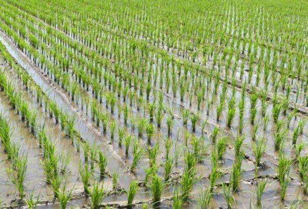 精密農業は食料危機を乗り越えるための最新の農業!