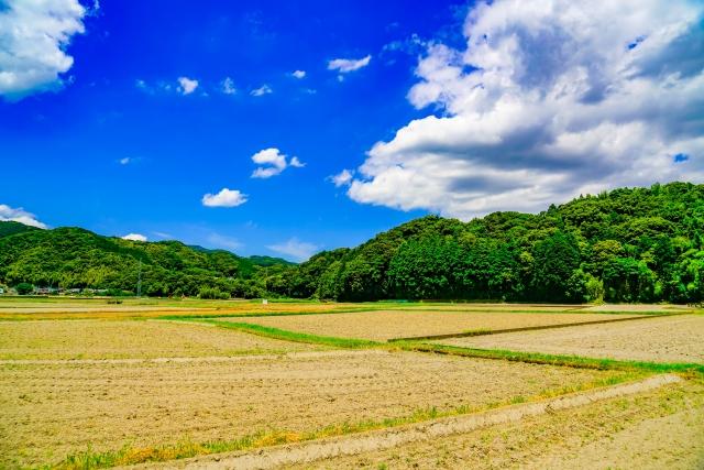 ドローンを使った農薬散布は簡単!スマート農業第一歩はドローン農薬散布