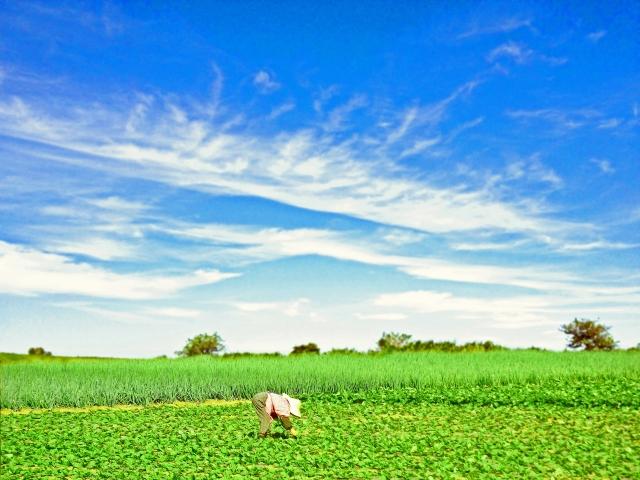 完全自律飛行農薬散布ドローン「EA2020」×「いろは」で農薬散布が変わる!